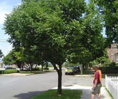City of Watertown Tree Data Collection Application